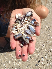 Open Hand of Shells and Possibilities